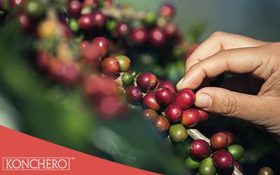 Geçmişten bugüne kahve tohumundan, kupaya giden serüven.